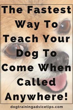 Dog Training Chewing The Fastest Way to Teach Your Dog to Come When Called Anywhere! Training Chewing The Fastest Way to Teach Your Dog to Come When Called Anywhere! Training Your Puppy, Dog Training Tips, Brain Training, Puppy Training Schedule, Training Videos, Easiest Dogs To Train, Dog Training Techniques, Dog Care Tips, Pet Tips