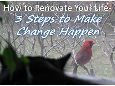 Learn how a persistent Cardinal pecking at my window day after day reminded me of what has to happen if you want to make changes in your life: #Change #Steps Photo Credit: Observe The Banana via Compfight cc