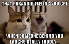 Funny laughing cat memes