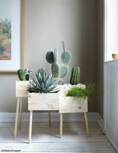 DIY: Blumenkasten aus Holz selber machen - Bild 13 - Cactus dans caisse de vin More More You are in the right place about cute office decor small