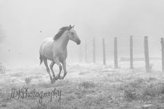 equestrian and pet photographyJBKPhotography