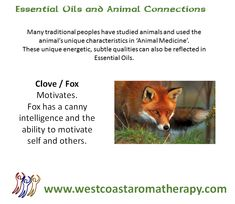 Essential Oil and Animal Connection: Clove and Fox  #westcoastaromatherapy #essentialoils #clove #fox