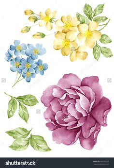 watercolor illustration flower set in simple white background Easy Watercolor, Watercolor Texture, Watercolor Flowers, Botanical Illustration, Watercolor Illustration, Flower Images, Flower Art, Floral Drawing, Oeuvre D'art