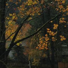 Hello Autumn 🍂 #portland #autumn