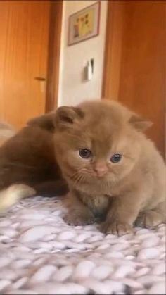 Cute Baby Cats, Cute Little Animals, Cute Cats And Kittens, Cute Funny Animals, I Love Cats, Kittens Cutest, Cute Dogs, Funny Animal Memes, Funny Animal Videos