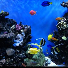 Monterey Bay Aquarium ~love this place!