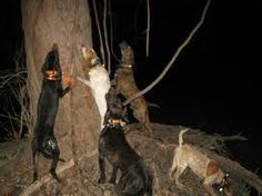 coon hunting.