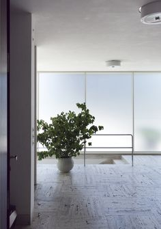 Brunner Sanina - Architect - Ludwig Mies van der Rohe- Villa Tugendhat - Brno - Czen Republic- 1930 - photo by Alexandra Timpau Ludwig Mies Van Der Rohe, Home Design 2017, House Design, Minimal Architecture, Architecture Details, Modern Architects, Light And Space, Interior Plants, Midcentury Modern