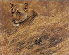 Robert Bateman - In the Grass - Lioness