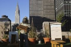How A Rise In Backyard Beekeeping Can Help Teach City-Dwellers About Climate Change