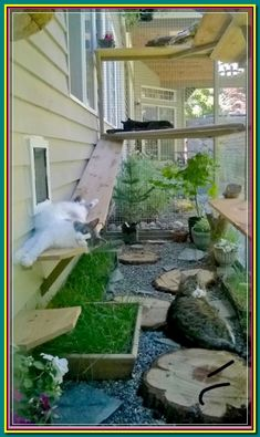 Outside Cat Enclosure, Diy Cat Enclosure, Cat Fence, Cat Grass, Cat Window, Window Boxes, Cat Cages, Outdoor Cats, Outdoor Cat House Diy