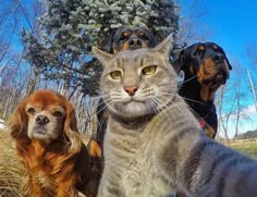 Selfie with the Crew! There's always a Bad Ass with every Crew, looks like the Rottweiler hooked up with a Cat!