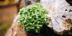 Χρήσιμα Tips Archives - Page 112 of 124 - idiva. Tiny Balcony, Herbalism, Home And Garden, Herbs, Backyard, Exterior, Tips, Flowers, Plants