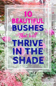 LOVE this list of shade shrubs! I needed something to plant under the trees in my backyard and now I know what to put there. Pinning!
