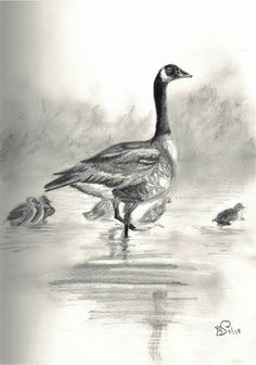 Canada Geese by BethSquirrell from reference with kind permission by Ben Jenkins. Graphite on sketch paper Sketch Paper, Graphite, Sculptures, Wildlife, Felt, Canada, Fantasy, Artwork, Painting