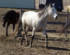 Separation anxiety in horses and how to help them