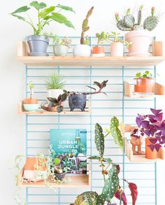 #plantshelfie with lots of houseplants and #urbanjunglebook