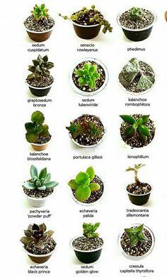 2.25 | Pinterest | Low maintenance plants, Plants and Terraria