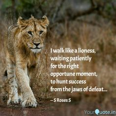 Lioness quotes women - photo#34