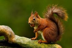 40 Stunning Photographs of Animals