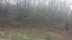 back yard 21.jpg