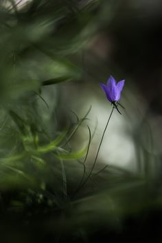A flower is not a flower. by Michela_Chiarizio on 500px