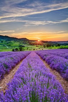 Sunset,lavender fields, FranceArt, Nature, Home And IdeasMore Pins Like This At FOSTERGINGER @ Pinterest✋