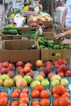 Camellia City Farmers Market - Slidell, Louisiana