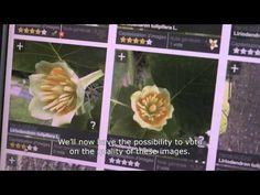 Aplicativo ajuda a descobrir nome de plantas