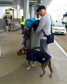 Leaving for Germany. Junior is ready with his fleece coat. #CesarMillanLive