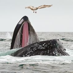 Never saw the inside of a whale's mouth before