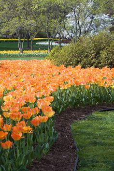 Baltimore Bucket List: visit Sherwood Gardens *when the flowers are in bloom*