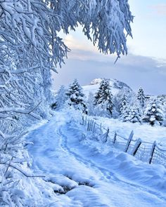 Beautiful pathway in Winter.