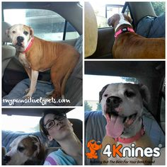 Going on a Doggy Adventure With 4Knines | Pawsitively Pets#comment-form#comment-form#comment-form