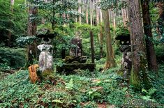 japanese forest - Google Search