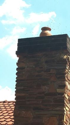 Bee removal in chimney in Vereeniging and Acon park