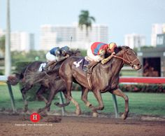 A. P. Indy Winning The Breeders Cup Classic To Wrap Up Champion 3 Year Old And Horse Of The Year Award In 1992