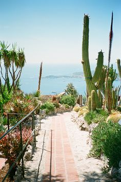 Cactus and succulent view to the sea