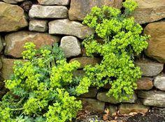 Bauanleitung für eine Trockenmauer - Mein schöner Garten