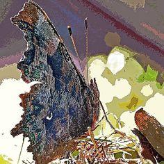 """Papillon l' Alien """" le Magnifique ! """" 1 c(h) par Olavia-Olao & Okaio Créations  fz 1000"""
