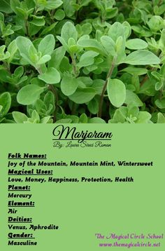 Marjoram Magical Properties - The Magical Circle School - www.themagicalcircle.net