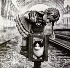 Viaggio nel Mondo: ❀♪✿ Gatti ღ❤