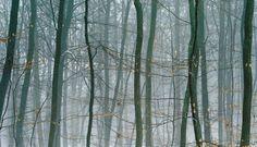 The favorites of Florence and Damien Bachelot at Paris Photo - The Eye of Photography Magazine Salzburg, Contemporary Photography, Contemporary Art, Color Photography, Landscape Photography, Grand Palais Paris, Art Basel Hong Kong, Agricultural Buildings, Paris Photos