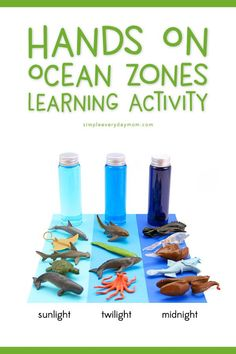 Ocean Zones For Kids: Learning About The Amazing Ocean Animal Activities For Kids, Sea Activities, Educational Activities, Preschool Activities, Camping Activities, Camping Ideas, Layers Of The Ocean, Ocean Zones, Ocean Habitat