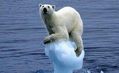 Dit is een foto van ons maatschappelijk probleem. Ik heb een ijsbeer gekozen omdat dat goed de opwarming van de aarde symboliseert.