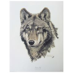 Print - Timber Wolf by Guy Coheleach