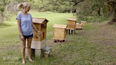 Flow Hive's backyard beekeeping expert Louise looks at the differences between the most common types of beehives to help you decide which is the best choice ...