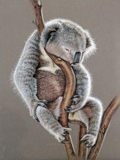 Koala Sleep von Arts & Dogs by Nicole Zeug auf DaWanda.com