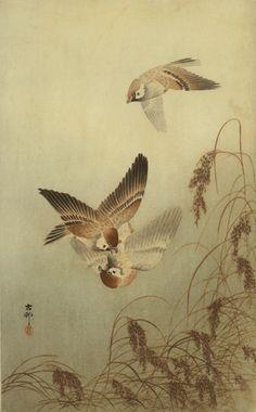 Ohara Koson (Shoson). 1877-1945.  Sparrows over Grass.