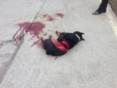 The chief of the National Police Agency, South Korea: Dog killed with Chain saw, Attacker needs firm punishment.  Terribly sad.
